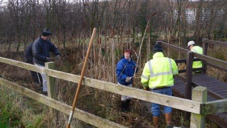 Volunteers clearing pond plants