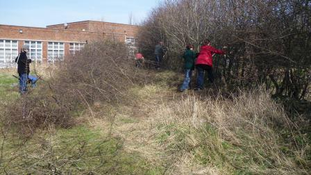 Volunteers hedge laying web