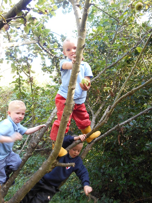 forest school tree climbing small