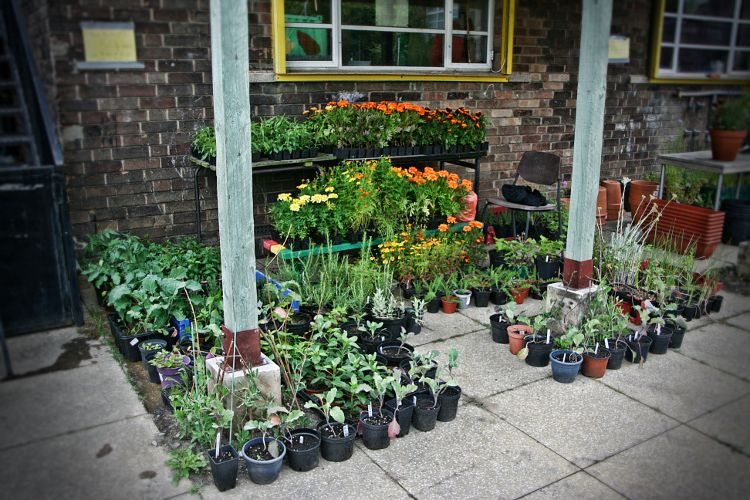open day plant sales